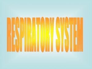 Respiratory system Upper respiratory system 1 Nose pharynx