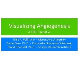 Visualizing Angiogenesis A CREST Initiative Elise A Pellmann
