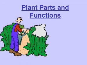 Plant Parts and Functions Parts of The Plant