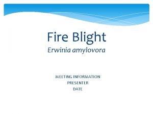 Fire Blight Erwinia amylovora MEETING INFORMATION PRESENTER DATE