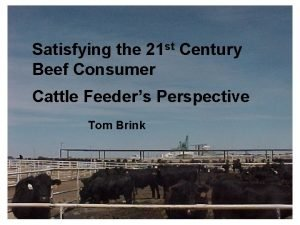 Satisfying the 21 st Century Beef Consumer Cattle