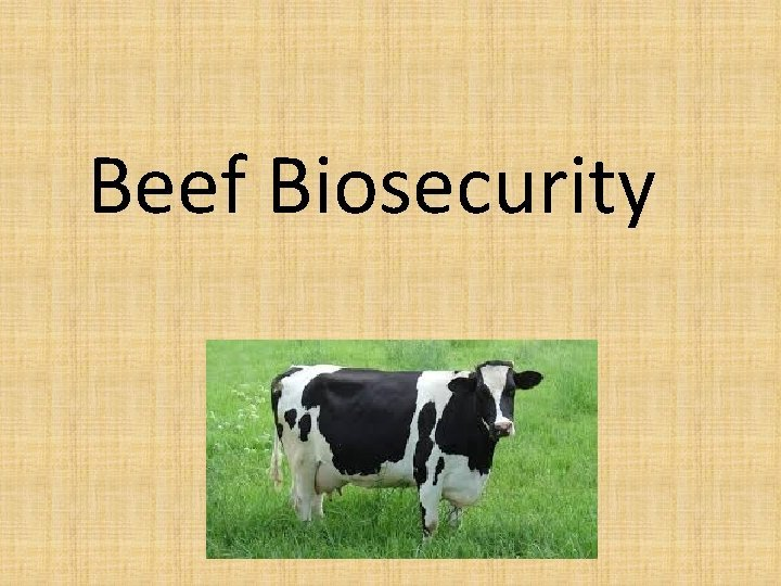 Beef Biosecurity What is Beef Beef is the