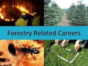 Forestry Related Careers Forestry Related Careers What kind