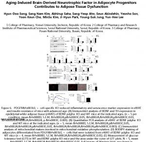 AgingInduced BrainDerived Neurotrophic Factor in Adipocyte Progenitors Contributes