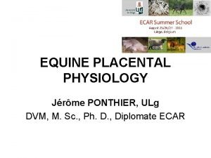 EQUINE PLACENTAL PHYSIOLOGY Jrme PONTHIER ULg DVM M