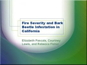 Fire Severity and Bark Beetle Infestation in California
