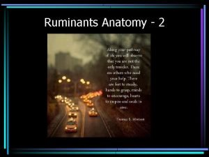 Ruminants Anatomy 2 Objectives Reproductive anatomy and Mammary