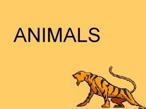 ANIMALS Animals Definition multicellular heterotrophic eukaryotes no cell