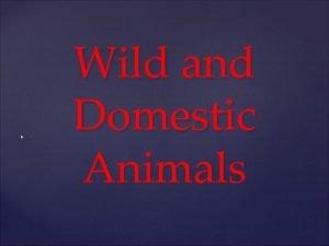 Wild and Domestic Animals Domestic Animals Cat It