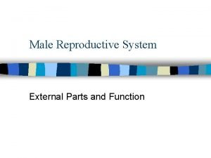 Male Reproductive System External Parts and Function Male