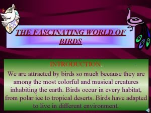 THE FASCINATING WORLD OF BIRDS INTRODUCTION We are