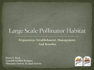 Large Scale Pollinator Habitat Preparation Establishment Management And