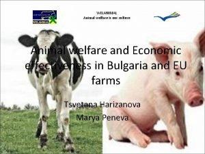 WELANIMAL Animal welfare is our culture Animal welfare