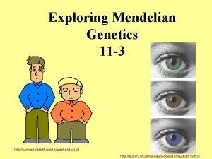 Exploring Mendelian Genetics 11 3 http www eslkidstuff