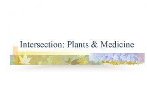 Intersection Plants Medicine Plants A source for meds