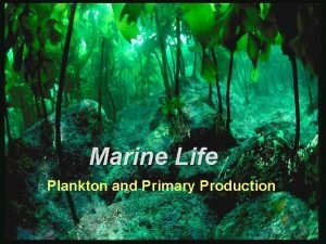 Marine Life Plankton and Primary Production Main Concepts