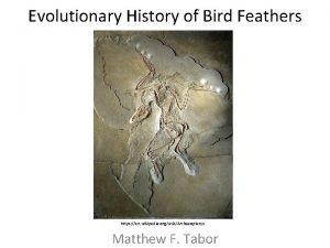 Evolutionary History of Bird Feathers https en wikipedia