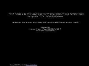 Protein Kinase C Epsilon Cooperates with PTEN Loss