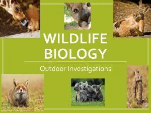 WILDLIFE BIOLOGY Outdoor Investigations Wildlife Biology 1 28