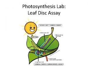 Photosynthesis Lab Leaf Disc Assay Lab Design Comparison