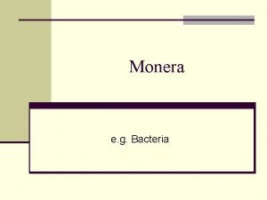 Monera e g Bacteria Bacteria in pond water