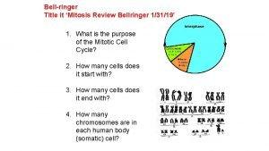 Bellringer Title it Mitosis Review Bellringer 13119 1