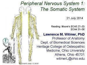Peripheral Nervous System 1 The Somatic System 21