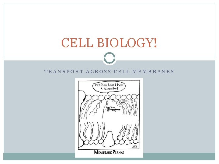 CELL BIOLOGY TRANSPORT ACROSS CELL MEMBRANES Cell membrane