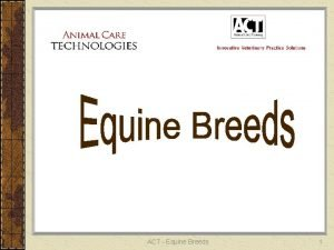 ACT Equine Breeds 1 ANALUSIAN Light Breed 15