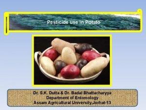 Pesticide use in Potato Dr S K Dutta
