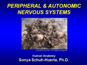 PERIPHERAL AUTONOMIC NERVOUS SYSTEMS Leonardo Da Vinci The