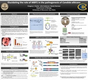 Elucidating the role of MBP 1 in the