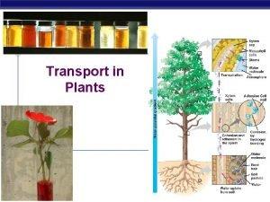 Transport in Plants AP Biology 2006 2007 Transport