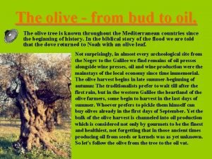The olive from bud to oil The olive