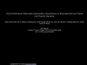 PLEKHA 4kramer Attenuates Dishevelled Ubiquitination to Modulate Wnt