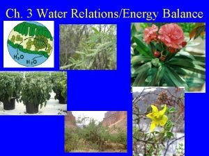 Ch 3 Water RelationsEnergy Balance Water potential tour