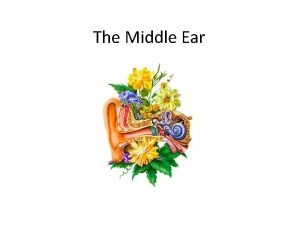 The Middle Ear Middle ear Anatomy Air containing