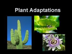 Plant Adaptations Types of Adaptations Structural adaptations are