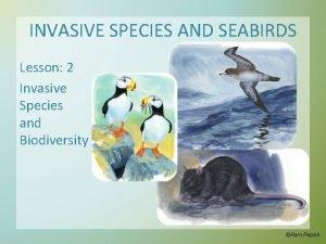 INVASIVE SPECIES AND SEABIRDS Lesson 2 Invasive Species
