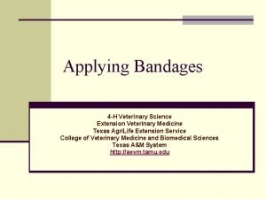 Applying Bandages 4 H Veterinary Science Extension Veterinary