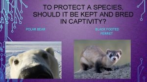 TO PROTECT A SPECIES SHOULD IT BE KEPT