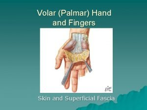 Volar Palmar Hand Fingers Skin and Superficial Fascia