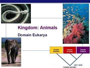 Kingdom Animals Domain Eukarya Domain Bacteria AP Biology