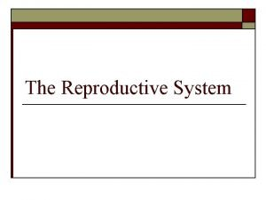 The Reproductive System Male Reproductive System Testes Epididymis