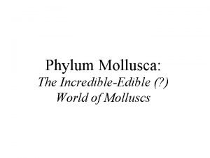 Phylum Mollusca The IncredibleEdible World of Molluscs Nautilus
