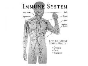 Elimination System Digestive system Immune system System Circulatory