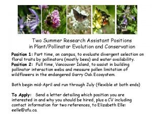 Two Summer Research Assistant Positions in PlantPollinator Evolution
