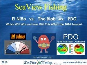 Sea View Fishing El Nio vs The Blob