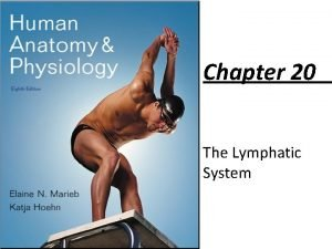 Chapter 20 The Lymphatic System Lymphatic System Consists