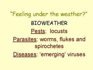 Feeling under the weather BIOWEATHER Pests locusts Parasites